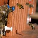 Anflug mit Pollen