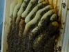 Krumme Waben