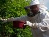 Bienen in den Becher