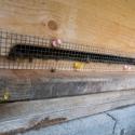 Mäuseschutz