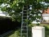 Im Kirschbaum