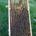 Bienenkiste 2
